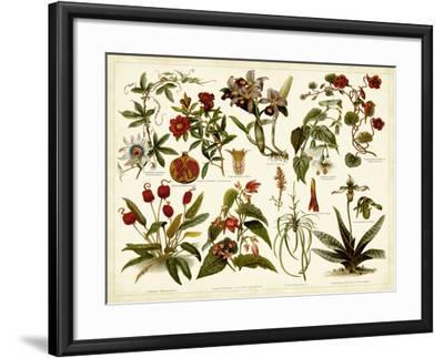 Tropical Botany Chart II-Meyers-Framed Art Print