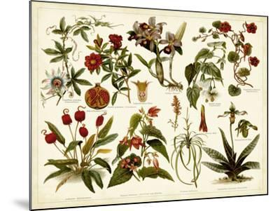 Tropical Botany Chart II-Meyers-Mounted Art Print