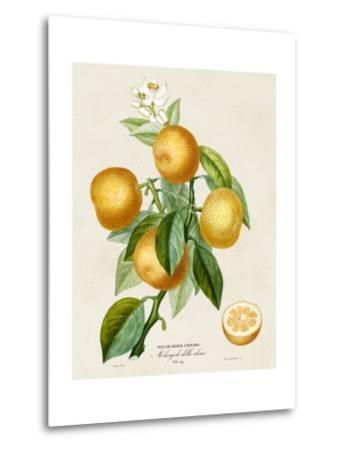 French Orange Botanical III-A^ Risso-Metal Print