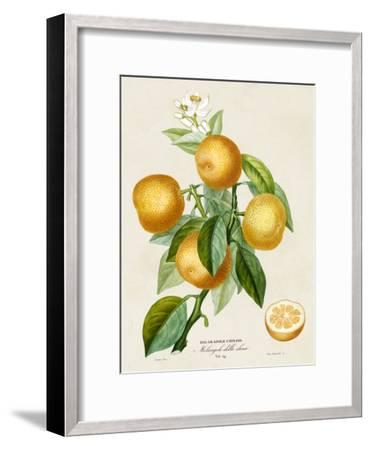 French Orange Botanical III-A^ Risso-Framed Art Print