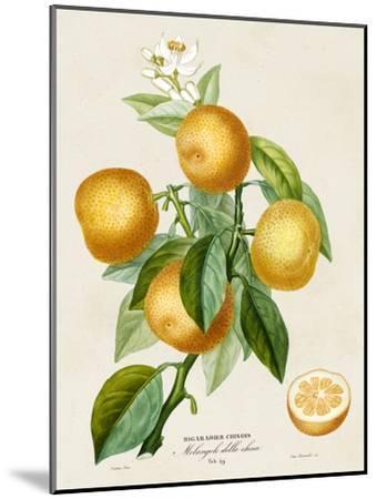 French Orange Botanical III-A^ Risso-Mounted Art Print