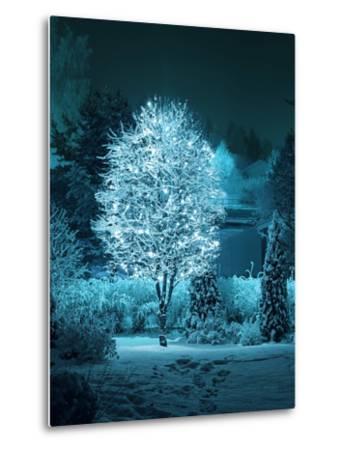 Illuminated Tree in Winter Garden-Hannuviitanen-Metal Print