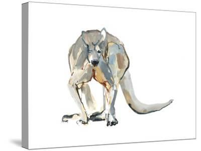 Boxer (Red Kangaroo), 2012-Mark Adlington-Stretched Canvas Print