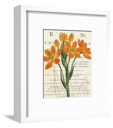 Euphorbia Botany-Sue Schlabach-Framed Art Print
