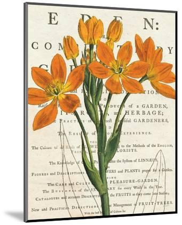 Euphorbia Botany-Sue Schlabach-Mounted Art Print