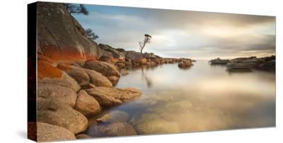 Tasmania, Australia. Binalong Bay, Bay of Fires at Sunrise-Matteo Colombo-Stretched Canvas Print