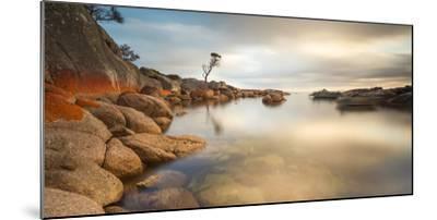 Tasmania, Australia. Binalong Bay, Bay of Fires at Sunrise-Matteo Colombo-Mounted Photographic Print