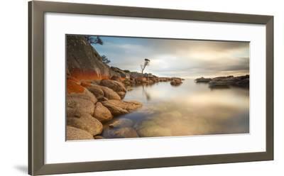Tasmania, Australia. Binalong Bay, Bay of Fires at Sunrise-Matteo Colombo-Framed Photographic Print