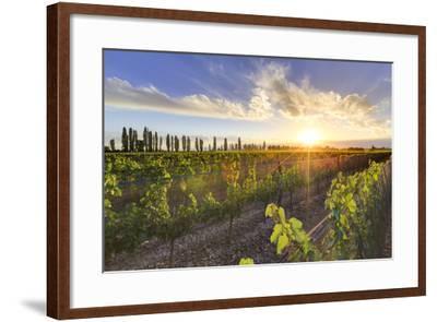 Argentina, Mendoza, Lujan De Cuyo, Malbec Grape Wineries-Michele Falzone-Framed Photographic Print