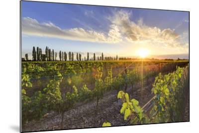 Argentina, Mendoza, Lujan De Cuyo, Malbec Grape Wineries-Michele Falzone-Mounted Photographic Print