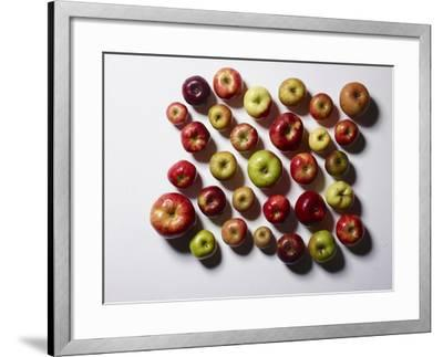 Heirloom Varieties of Apples-Rebecca Hale-Framed Photographic Print