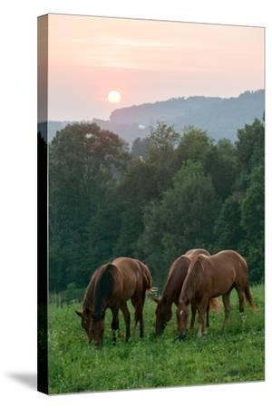 In Rural Hilly Farmland, a Team of Horses Feed on Grass at Sunset-Eric Kruszewski-Stretched Canvas Print