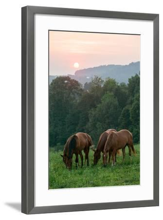 In Rural Hilly Farmland, a Team of Horses Feed on Grass at Sunset-Eric Kruszewski-Framed Photographic Print