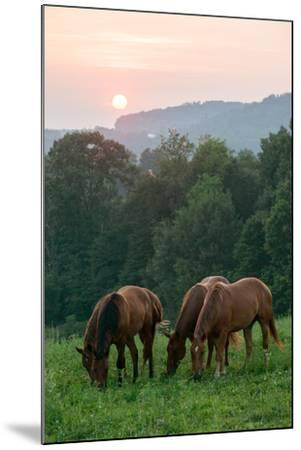 In Rural Hilly Farmland, a Team of Horses Feed on Grass at Sunset-Eric Kruszewski-Mounted Photographic Print