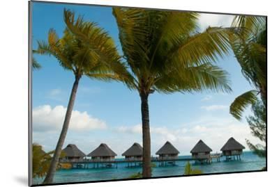 Palm Trees and Vacation Cottages over Water on Bora Bora-Karen Kasmauski-Mounted Photographic Print
