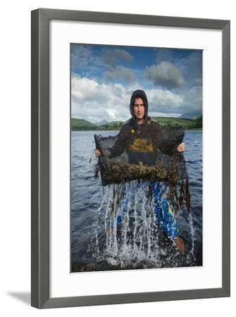 An Oyster Farmer Pulls a Bag of Pacific Oysters Out of the Cold Waters-Jim Richardson-Framed Photographic Print