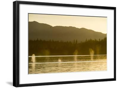Geysers of Spray from Six Humpback Whales Exhaling in the Inside Passage-Jonathan Kingston-Framed Photographic Print