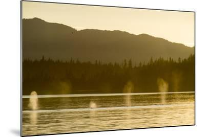Geysers of Spray from Six Humpback Whales Exhaling in the Inside Passage-Jonathan Kingston-Mounted Photographic Print