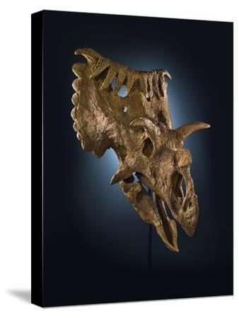 Kosmoceratops Richardsoni, a Rhino-Size Plant-Eater That Lived on Laramidia-Cory Richards-Stretched Canvas Print