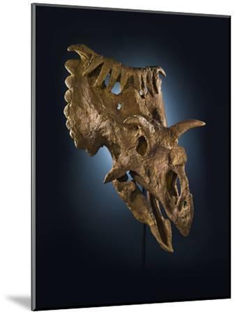 Kosmoceratops Richardsoni, a Rhino-Size Plant-Eater That Lived on Laramidia-Cory Richards-Mounted Photographic Print