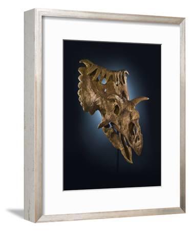 Kosmoceratops Richardsoni, a Rhino-Size Plant-Eater That Lived on Laramidia-Cory Richards-Framed Photographic Print