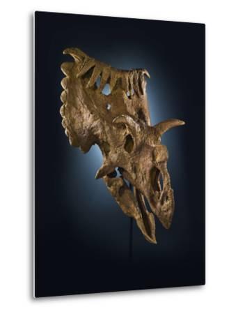 Kosmoceratops Richardsoni, a Rhino-Size Plant-Eater That Lived on Laramidia-Cory Richards-Metal Print