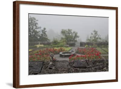 A Bird on a Rock Wall Overlooking an Herb Garden on a Foggy Rainy Day-Ulla Lohmann-Framed Photographic Print