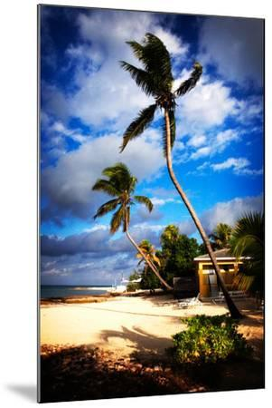 Palm Trees Sway over a Beach in the Cayman Islands in the Caribbean-Chris Bickford-Mounted Photographic Print