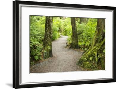 A Graveled Path Through the Woods of the Temperate Rainforest in Sitka, Alaska-Jonathan Kingston-Framed Photographic Print
