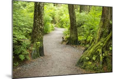 A Graveled Path Through the Woods of the Temperate Rainforest in Sitka, Alaska-Jonathan Kingston-Mounted Photographic Print