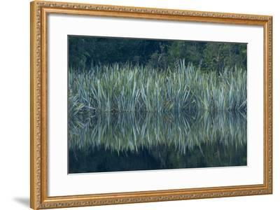 Vegetation Rims Lake Matheson in Westland National Park-Michael Melford-Framed Photographic Print