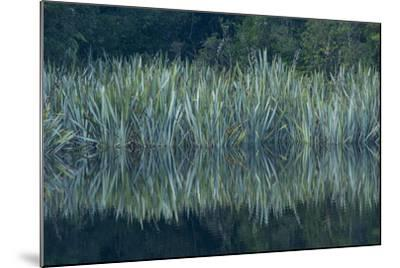 Vegetation Rims Lake Matheson in Westland National Park-Michael Melford-Mounted Photographic Print