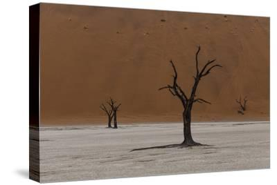 A Surreal Landscape of Dead Trees in a Clay Pan and Towering Sand Dunes-Jonathan Irish-Stretched Canvas Print