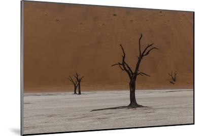 A Surreal Landscape of Dead Trees in a Clay Pan and Towering Sand Dunes-Jonathan Irish-Mounted Photographic Print