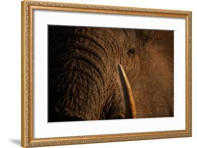 A Wild Bull Elephant Comes to Drink at the Ithumba Stockade-Michael Nichols-Framed Photographic Print