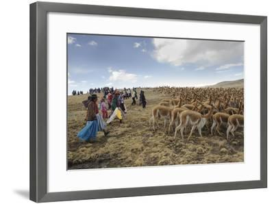 A Line of Quechua Villagers Herd a Group of Wild Vicuna-Beth Wald-Framed Photographic Print