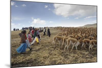A Line of Quechua Villagers Herd a Group of Wild Vicuna-Beth Wald-Mounted Photographic Print