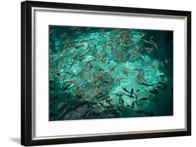 Fish Clustered around a Pier in the Ocean-Karen Kasmauski-Framed Photographic Print
