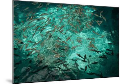 Fish Clustered around a Pier in the Ocean-Karen Kasmauski-Mounted Photographic Print