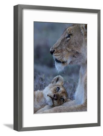 A Lion Cub Looks Up at its Mother-Michael Nichols-Framed Photographic Print