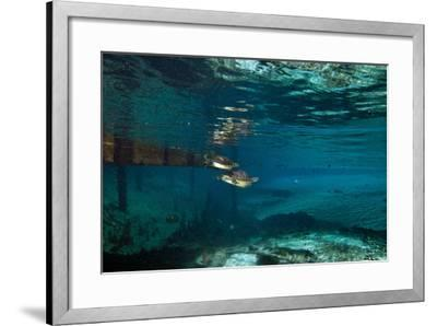 A Turtle Swimming after a Mate in Clear Blue Water-Joshua Howard-Framed Photographic Print