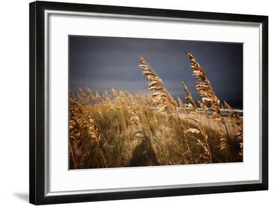 Dune Grasses in Cape Hatteras in North Carolina-Chris Bickford-Framed Photographic Print