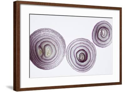 Slices of Red Onion-Rebecca Hale-Framed Premium Photographic Print