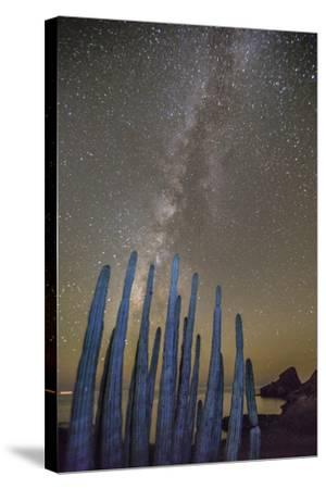 Night View of the Milky Way with Organ Pipe Cactus (Stenocereus Thurberi) in Foreground-Michael Nolan-Stretched Canvas Print