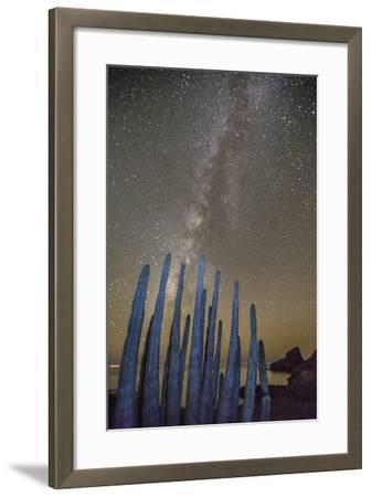Night View of the Milky Way with Organ Pipe Cactus (Stenocereus Thurberi) in Foreground-Michael Nolan-Framed Photographic Print