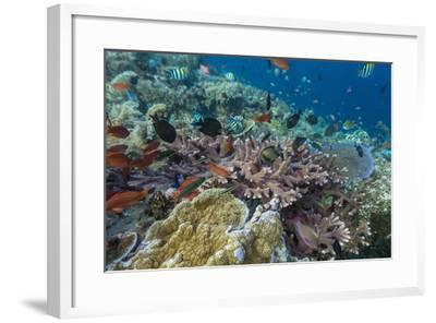A Profusion of Coral and Reef Fish on Batu Bolong, Komodo Island National Park, Indonesia-Michael Nolan-Framed Photographic Print