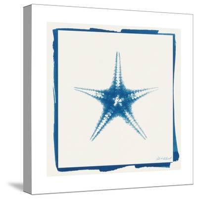 Cyan Starfish-Christine Caldwell-Stretched Canvas Print