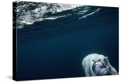 Underwater Polar Bear near Frozen Strait, Nunavut, Canada-Paul Souders-Stretched Canvas Print