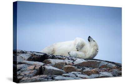 Polar Bear on Harbour Islands, Hudson Bay, Nunavut, Canada-Paul Souders-Stretched Canvas Print