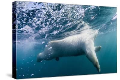 Underwater Polar Bear by Harbour Islands, Nunavut, Canada-Paul Souders-Stretched Canvas Print